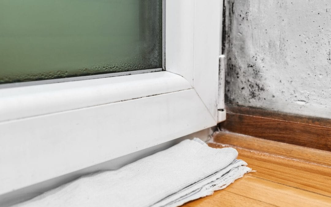 5 Ways to Prevent Mold Growth in Your Home