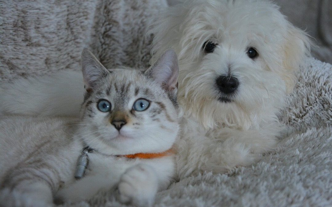3 Home Cleaning Tips for Pet Owners